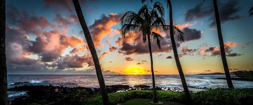 Sunset, Hawaii, Palms, Panorama, Coast, Coconut, Exotic