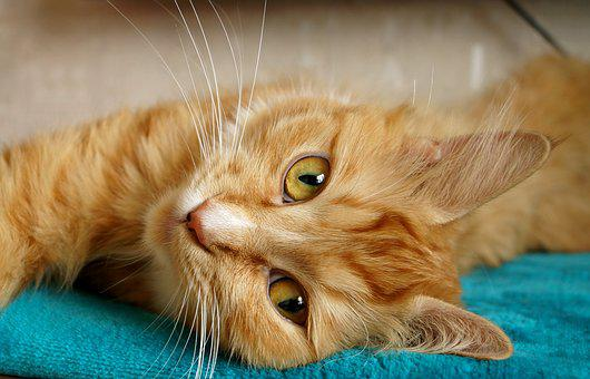 Freckle, Cat, Redhead