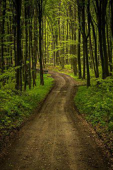 Forest, Road, Landscape, Nature, Outdoor, Tree, Green