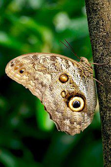 Butterfly, Exotic, Insect, Tropical, Wing, Animal
