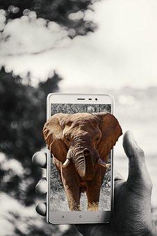 Elephant, Wild, Africa, Nature, Animal, Wildlife