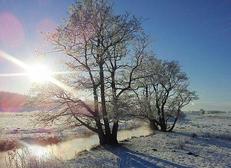 Winter, Rim, Natural, Ansager, Landscape, Wood, Frost