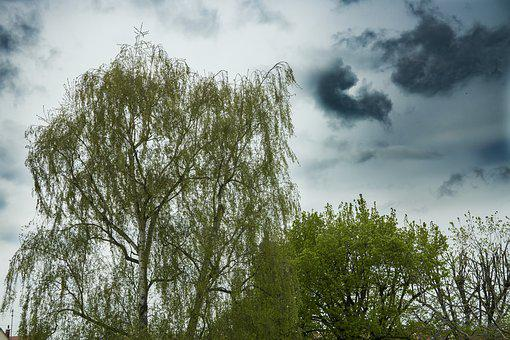 Birch, Crown, Nature, Trees, Sky, Green Leaves, Treetop