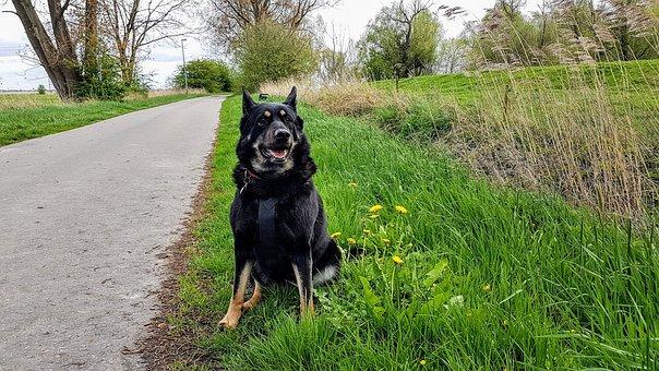 Dog, Leer Ostfriesland, Holiday