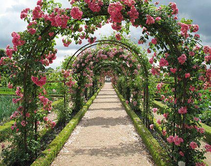 Roses, Espalie, Have, Fredensborg, The Rose Garden