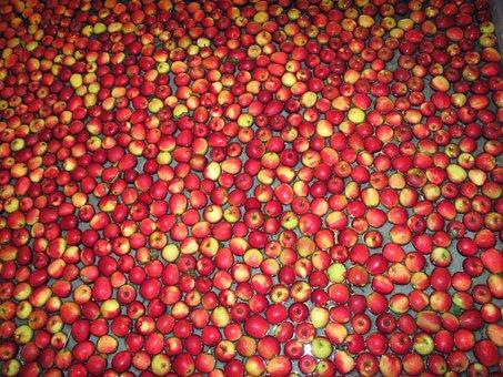 Apples, Fruit, Red Apples, Kivik, Sweden, Structure