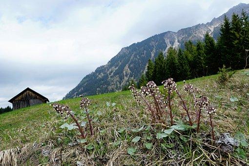 Meadow, Mountains, Allgäu, Behind Stone, Germany, Field