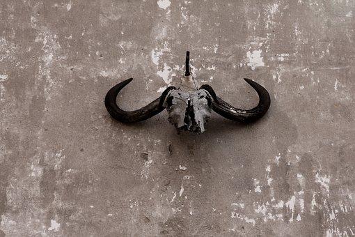 Skull, Gnu, Ox, Wall, Grunge, Bone, Dead, Death, Animal