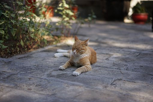 Temple Of The Cat, Hardship, Rest