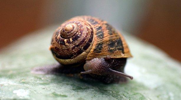 Snail, Shell, Close, Nature, Macro, Housing, Mollusk