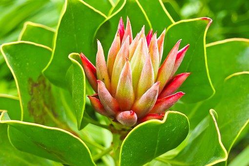 Wurz, Houseleek, Turmeric Plant