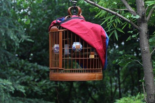Birdcage, Bird, Cage