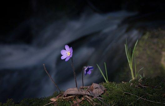 Flower, River, Blue, Blåveis, Light, The Nature Of The