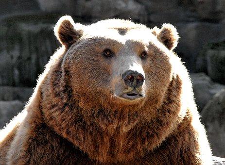 Bear, Nature, Zoo, Animal, Brown Bear, Animal World
