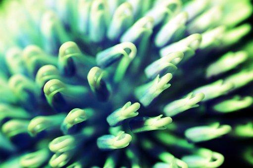 Plant, Growth, Macro, Closeup, Gardening, Botany