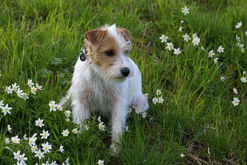 Domestic Dog, Spring, Dog, Dog Look, Mixed Breed Dog