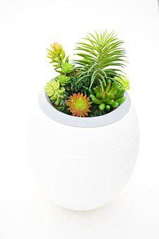 Plants, Urns Funeral Home, Ecology, Design, Funeral