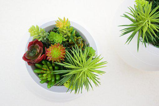Decoration, Plants, Funeral Urns, Design, Style