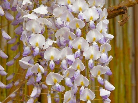 Flowers, Spring, Garden, Purple, White Flowers, Petals