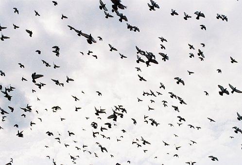 Birds, Birds Flying, Group Of Birds, Flying Birds, Fly