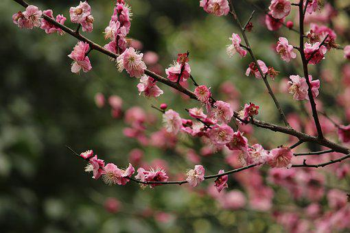 Flowers And Trees, Plum, Palace Powder Plum