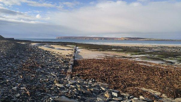 Sea, Beach, Water, Seaweed, Flotsam, Scotland