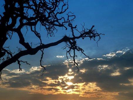 Photo, Landscape, Sky, Sunset, Tree, Bella