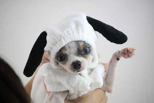 Dog, Snoopy, Cute, Littledog, Puppy
