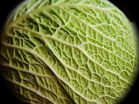 Savoy, Kohl, Cabbage, Vegetables, Healthy