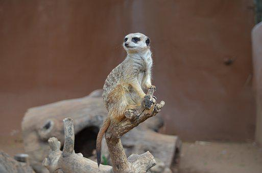 Animal, Wild, Wildlife, Mammal, Zoo, Eating, Cute