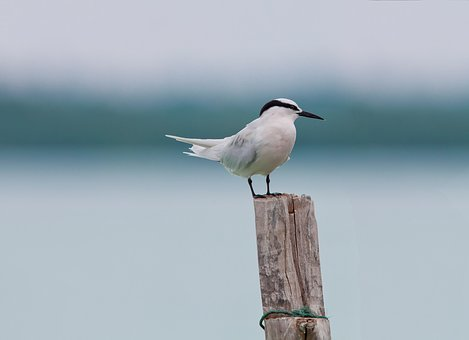 Bird, Area Program Services, Break, Tropical