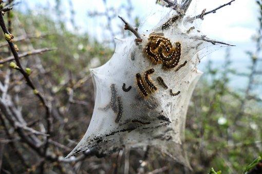 Caterpillar, Nest, Dream Nest, Cocooned