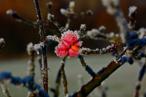 Flowers, Brina, Winter, Plant