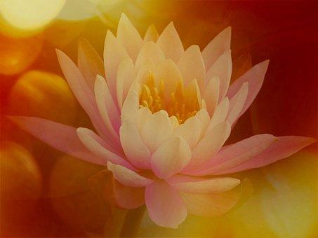Lily, Colour Splash, Nature, Floral, Petal, Flower