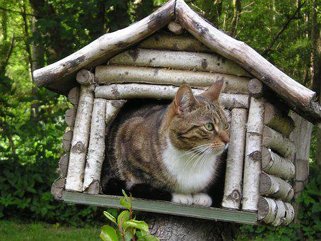Cat, Mackerel, In The Bird House