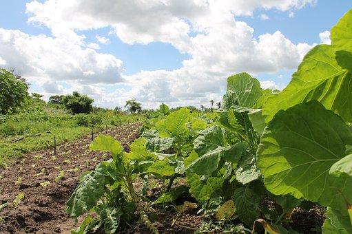 Horticulture Irrigated, Organic Agriculture, Sergipe