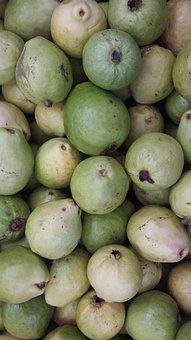 Irrigated Fruitculture, Guava, Sertão Nordestino