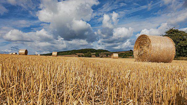 Straw Bales, Field, Straw, Round Bales, Agriculture