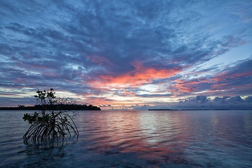 The Shallow Sea, Before Sunrise, Mangrove, Kojima