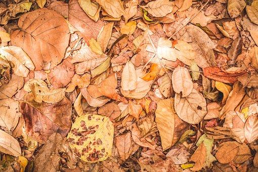 Leaves, Vegetation, Brown, Environment, Nature