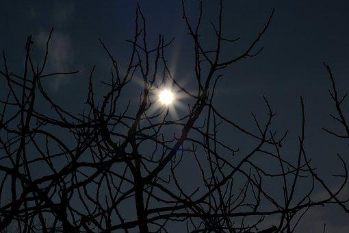 Moon, Fear, Halloween, Night, Horror, Dark, Scary
