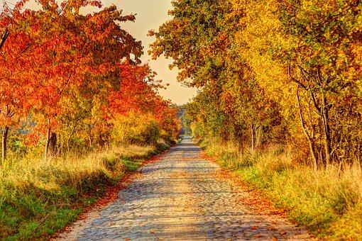 Road, Lane, Away, Nature, Dirt Track, Hiking, Landscape