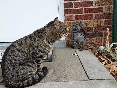 Cat, Feline, Furry, Pet, Tabby, Mammal, Kitty