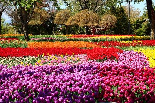 Tulip Festival, Passage Tulips, Tulip Garden, Konya