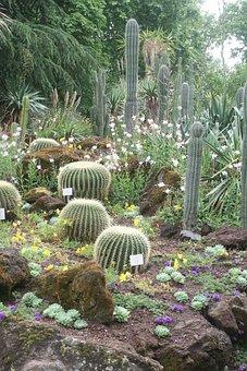 Cactus, Plant, Prickly, Schwiegermuttersitz, Spur