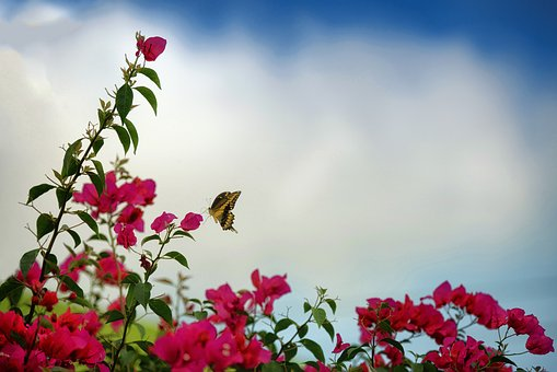Spring, Butterfly, Nature, Insects, Garden, Wings
