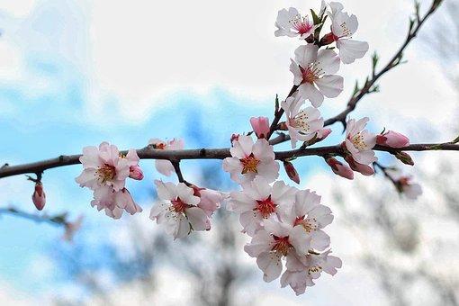 Flower, Spring, Spring Flower, Spring Flowers, Floral