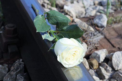 Stop Child Suicide, White Rose, Railway, School Stress