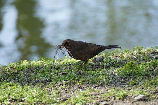 Bird, Preparing, For, Summer