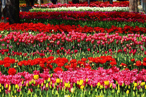 Colorful, Parade, The Feast Of Tulips, Tulips, Konya